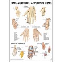 Product  Αφίσα Βελονισμού Χέρι (Poster Hand Acupuncture) base image
