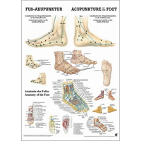 Product  Αφίσα Βελονισμού Πόδι (Poster Foot Acupuncture) base image