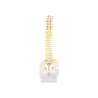 Product Πρόπλασμα Σπονδυλικής Στύλης (Spine Model) base image